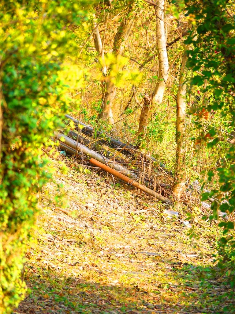 苗栗稻荷神社遺跡好漢坡中間的另一側小徑   Miaoli Inari Shrine Ruins   びょうりつし   ミアオリー   Wafu Taiwan   巡日旅行攝   RoundtripJp