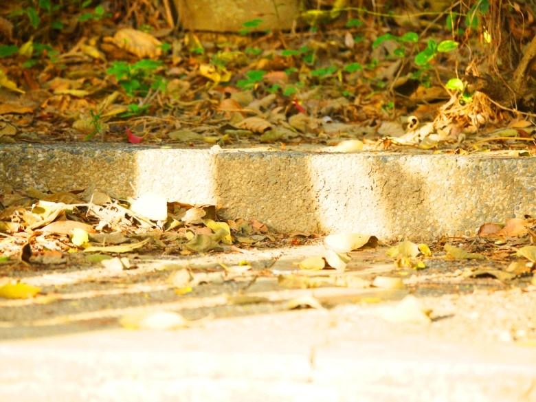 神社遺址   神社本殿基座   苗栗稻荷神社遺跡   びょうりついなりじんじ   びょうりつし   ミアオリー   Wafu Taiwan   巡日旅行攝   RoundtripJp