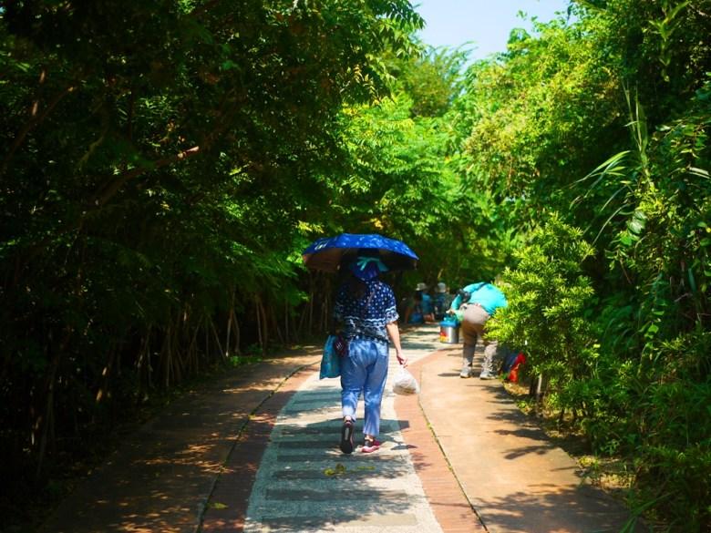 通往1號舊隧道前林蔭步道   微風徐徐   感受大自然   台灣旅人   ホウロン   こうりゅう   ミアオリー   Wafu Taiwan   巡日旅行攝   RoundtripJp