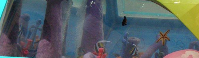 Highlander aquarium