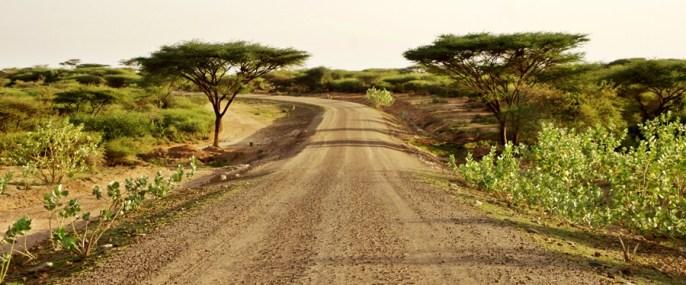 acacias' gate:)