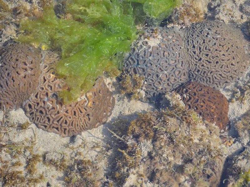 Corals at Pirotan islands