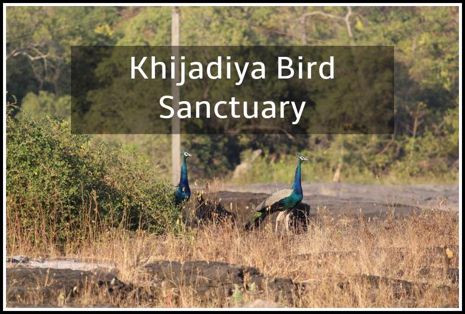 Khijadiya Bird Sancturary