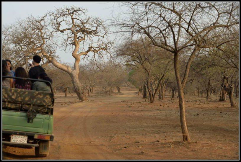 Gir Jungle Safari