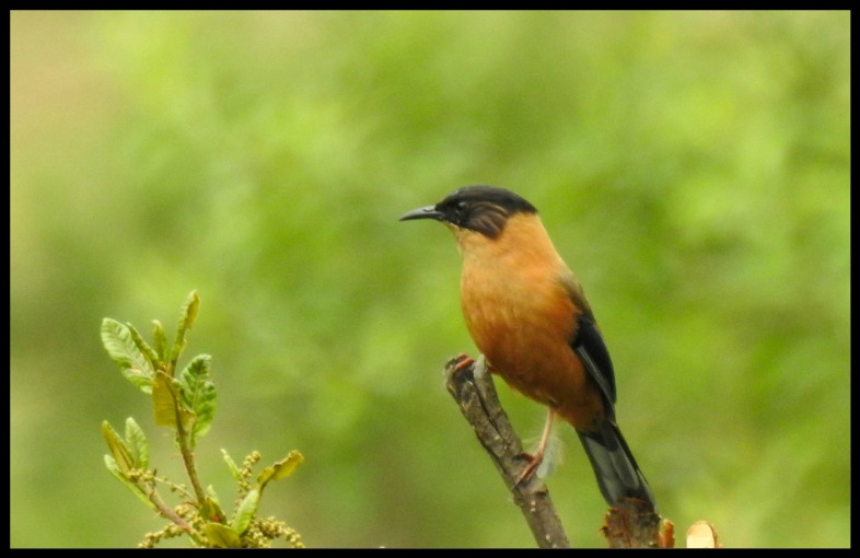 Bird at Bedini Bugyal