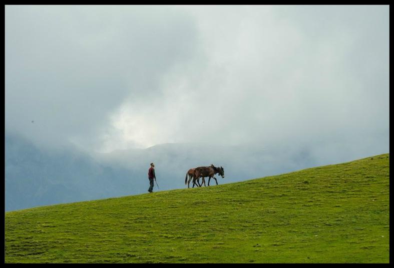 alpine grass meadowa at bedini bugyal