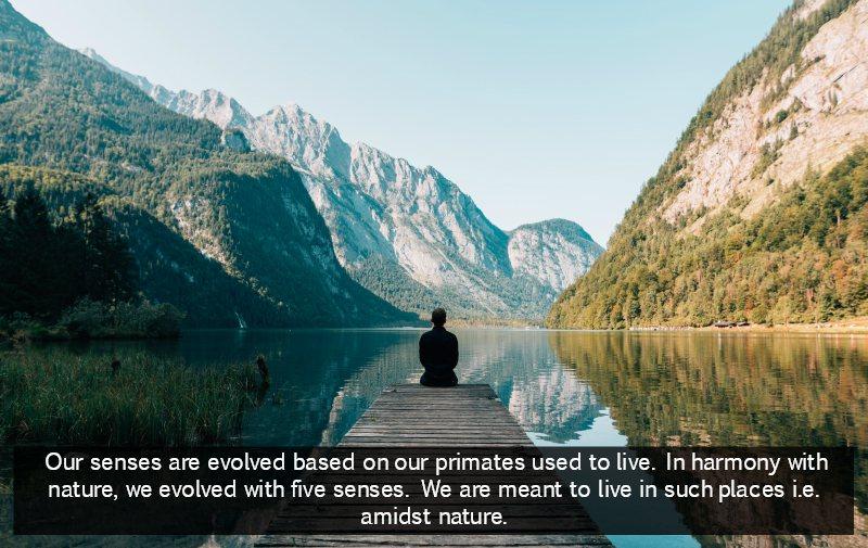 modern living killing our senses