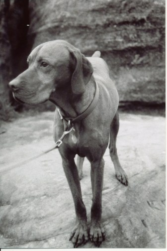 Dog on film