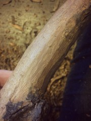 I started stripping the bark to reveal some gorgeous wood beneath - oak, I think.