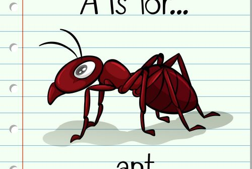 flashcard-letter-a-is-for-ant-vector-8384278