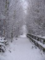 snowy path where Sarah runs