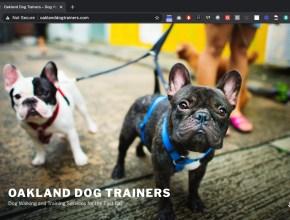 oakland dog trainer website design cheap