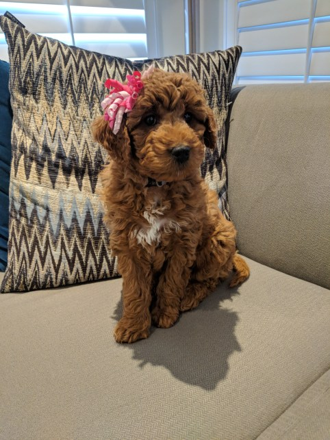 millie with curly bow