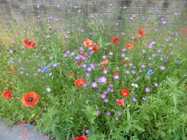 Wild flower border