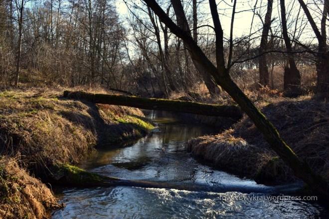 Potok Szewnianka