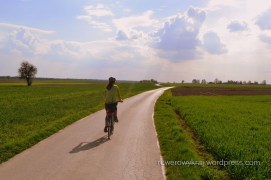 asfalt pośród pól Przedgórza Iłżeckiego