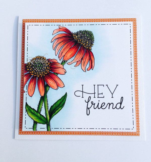 Rowhouse Greetings | Friendship | Easy Breezy Coneflowers by Power Poppy