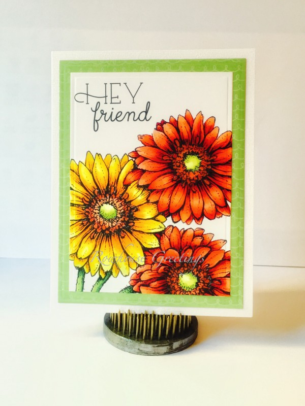 Rowhouse Greetings | Friendship | Gerber Daisies by Power Poppy