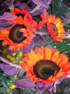 Sunflowers with Purple Leaves
