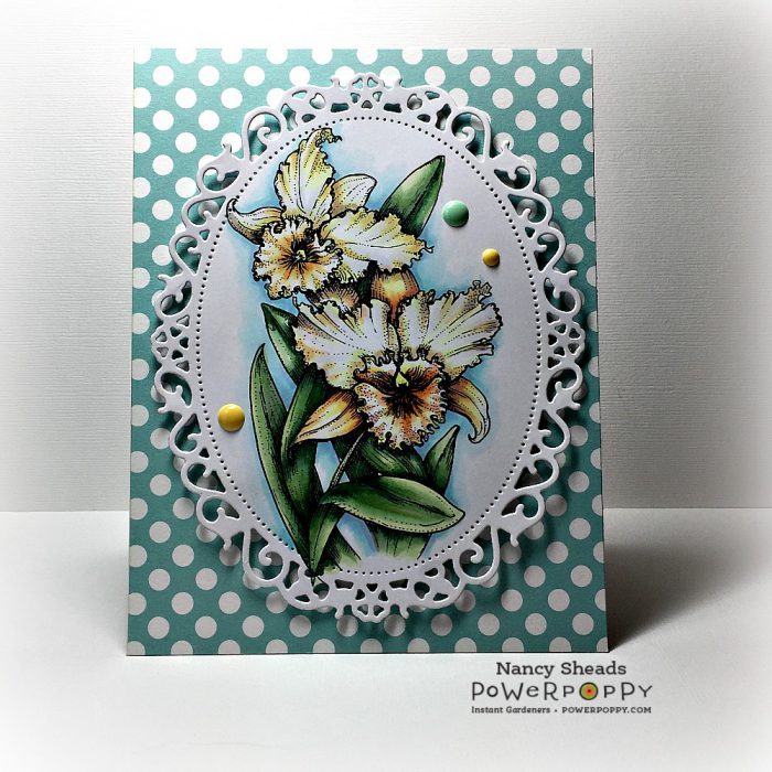 Rowhouse Greetings | Birthday | Ruffled Wild Orchids by Power Poppy
