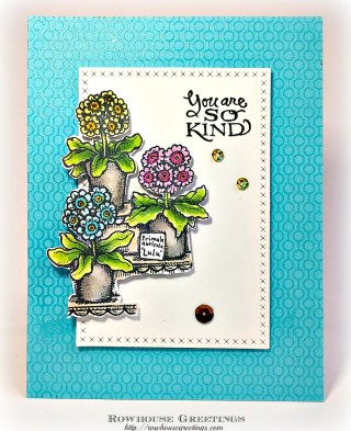 Rowhouse Greetings   Potted Primroses by Power Poppy