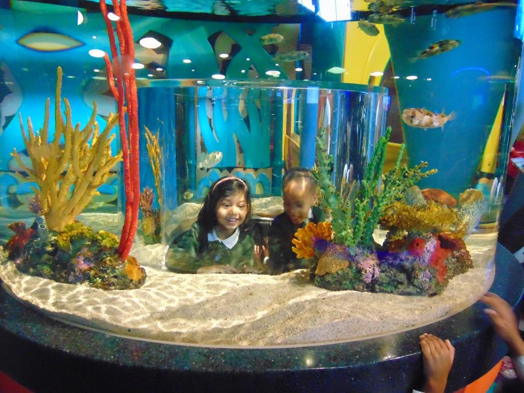 Under the Sea at Ripley's Aquarium