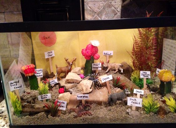A Model of an Ecosystem in a Tank