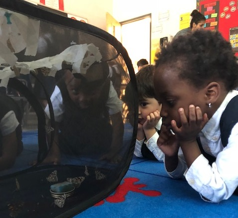 Kindergarten student at RMS private School Brampton looking at butterfly