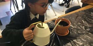 grade 3 student at private school watering her plant as she learns about the environment