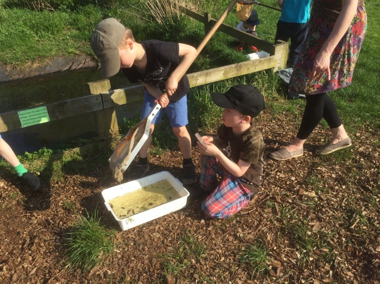 Rowntree Park pond dipping