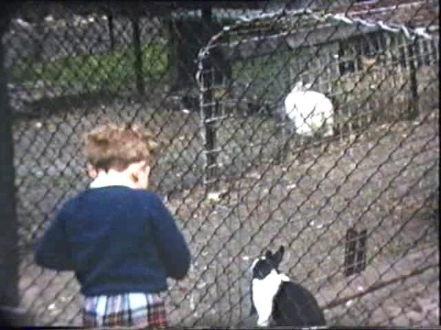 Rowntree Park animals History