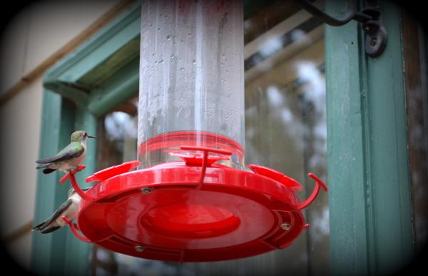 DuckLakeHummingbird