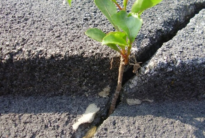 Stories from the Sidewalk: A sprig of hope remembered