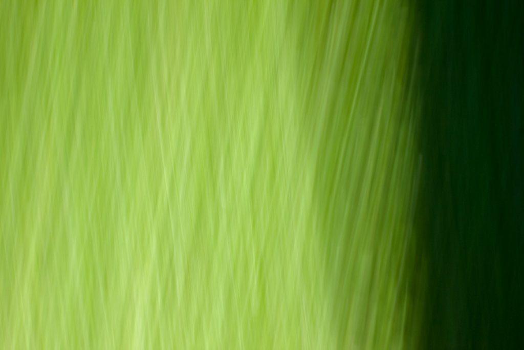 Deep Grass by Roxanne Darling
