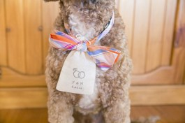 http://www.wantthatwedding.co.uk/2014/08/11/15-cute-ways-to-get-your-dog-wedding-ready-doggie-aisle-style/?crlt.pid=camp.rMg3G1f9W7iq