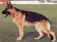 seiger german shepherd