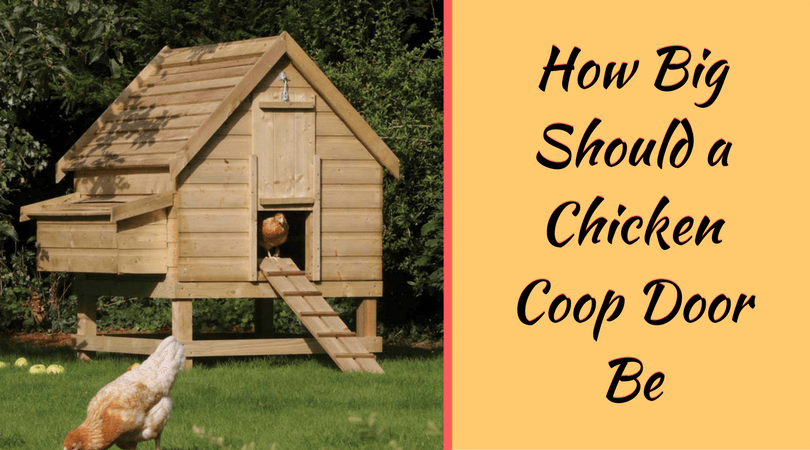 How Big Should a Chicken Coop Door Be