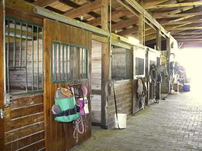 horse boarding stalls