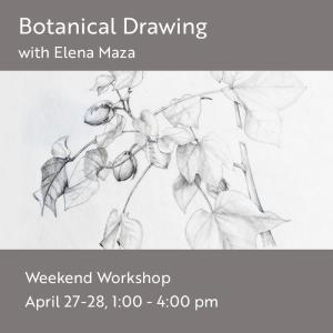 Botanical Drawing Workshop @ Art in the Valley