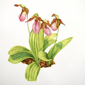 Botanicals in Watercolor I - Fall 2019 @ Art in the Valley