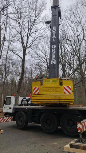 new tree service crane