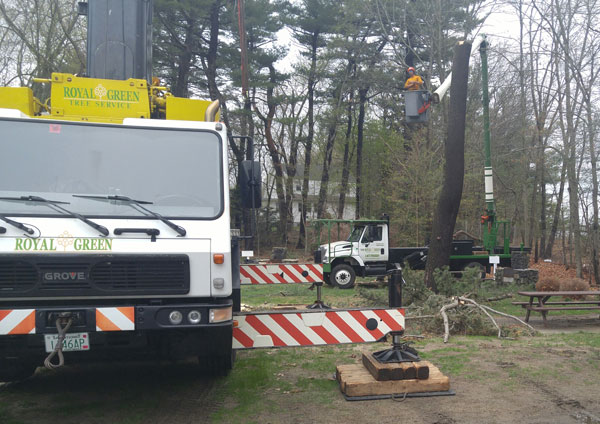 Tree removal in Stoneham, MA by Royal Green Tree Service