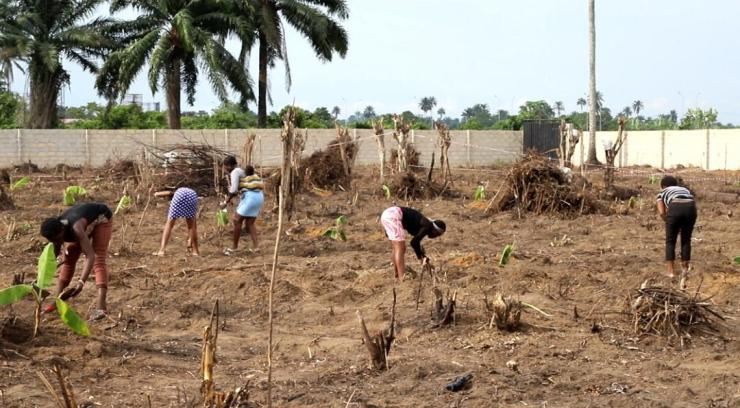 Ogun clears 1,000 hectares of land for modern farming