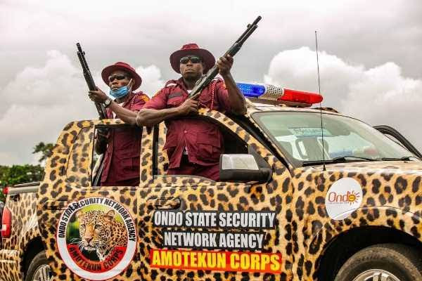 Over 400 cows arrested by Amotekun in Ondo