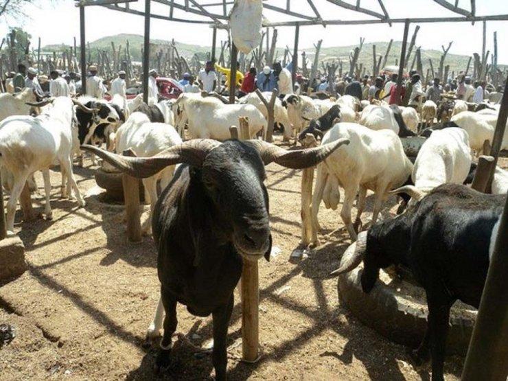 Eid-el Kabir: Ram sellers lament low patronage in Ogun