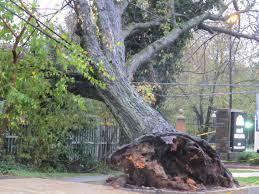 SAD.... Fallen tree kills 4 in Oyo during downpour
