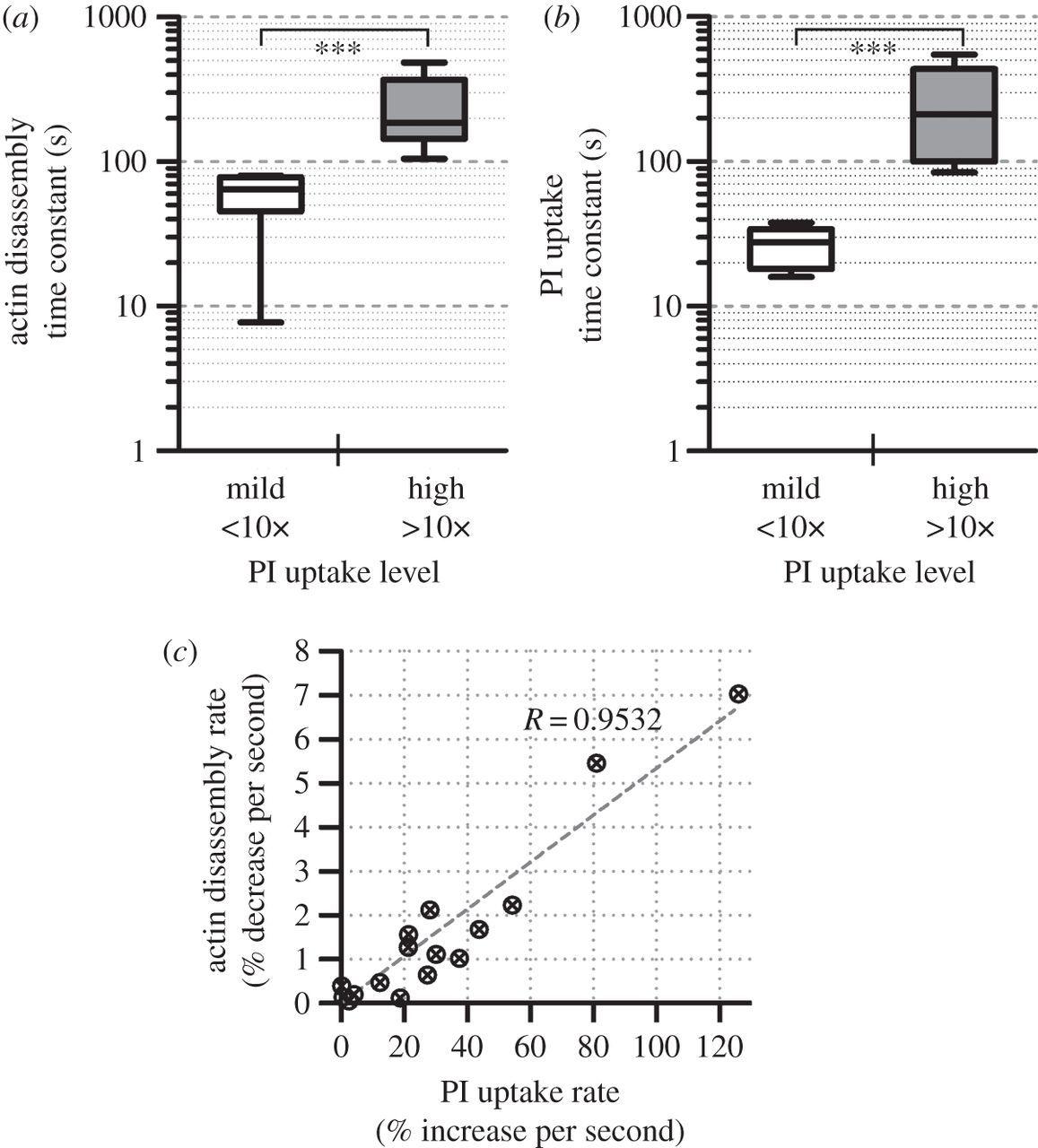 Single Site Sonoporation Disrupts Actin Cytoskeleton