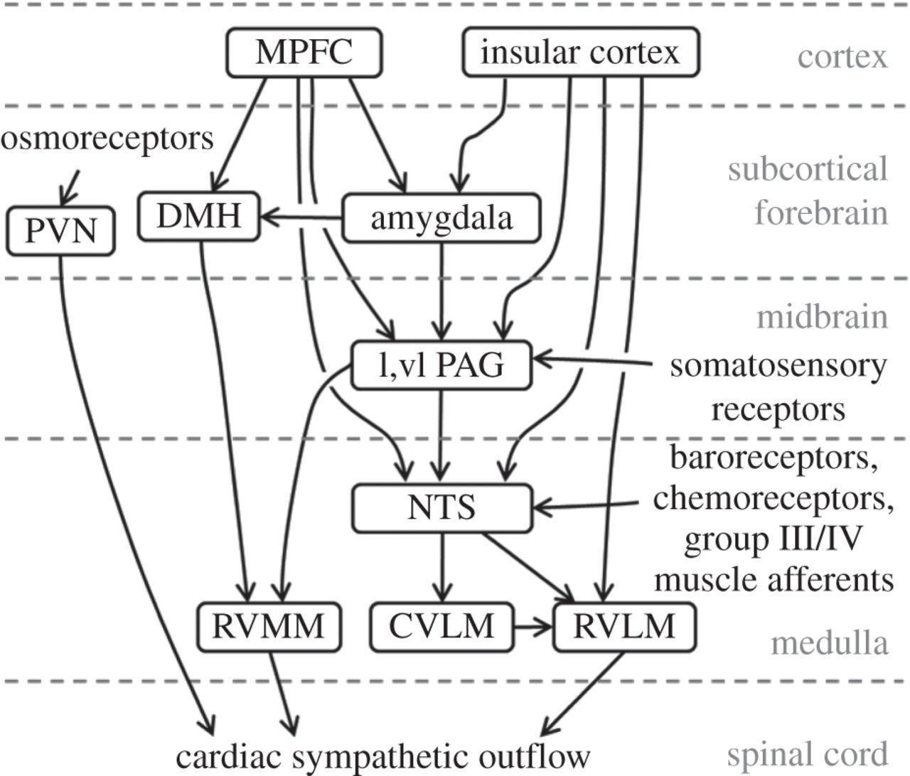 Brain Heart Interactions Physiology And Clinical