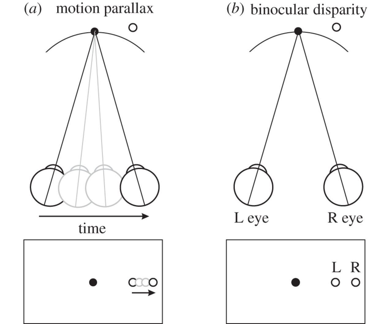 The Neural Basis Of Depth Perception From Motion Parallax