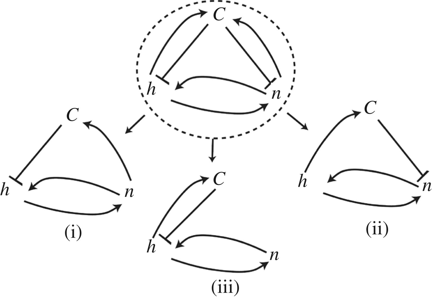 Guided By Curvature Shaping Cells By Coupling Curved